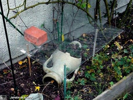 comment protéger vos plantes du froid pendant l'hiver ? - À lire