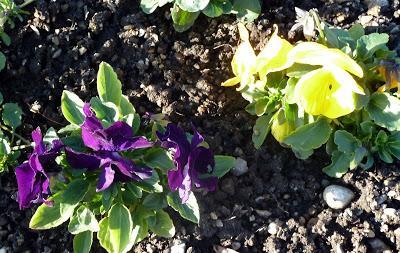 Floraisons de no l au jardin botanique de munich paperblog for Jardin botanique noel 2015
