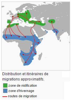 cigogne migration nidification hivernage