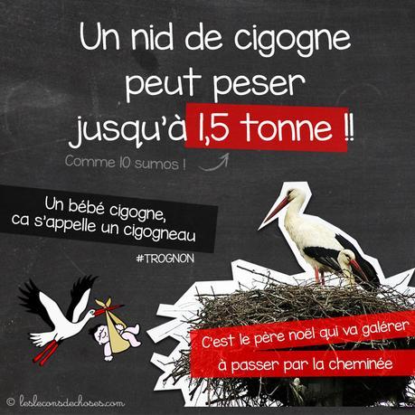 Un nid de cigogne peut peser jusqu'Ă une 1,5 tonne !