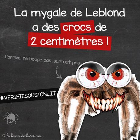 mygale de Leblond theraphosa blondi araignĂŠe la plus grosse du monde