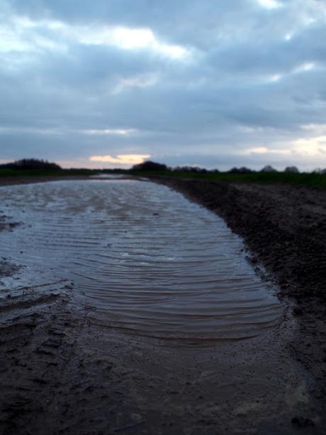 Miroirs et boue voir for Miroir dans la boue