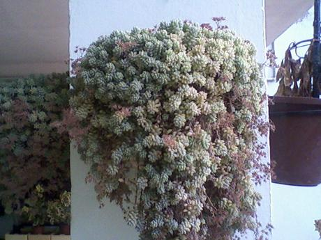 Une plante grasse l 39 haworthia lire for Grande plante grasse exterieur