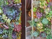 Succulents tableaux plantes