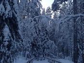 Envie #170 visite Ranua Laponie (Ours Polaire Inside)