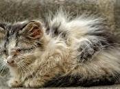 Laissez vivre réelle chat errant