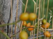 Donnez force arbres, arbustes, fruitiers, rosiers, plantes exterieures