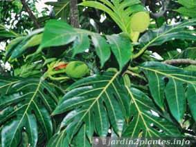 Une plante grimpante d 39 int rieur le philodendron - Plante d interieur grimpante ...