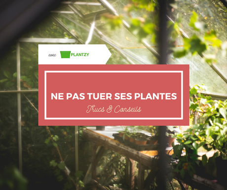 trucs et conseils pour ne pas tuer ses plantes avec plantzy d couvrir. Black Bedroom Furniture Sets. Home Design Ideas