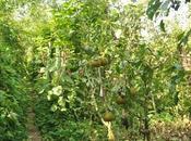 forêts comestibles étaient solution