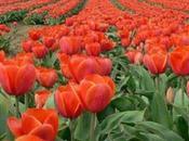 Offrons fleurs…
