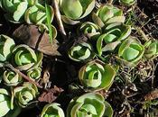 Succulentes astuces base