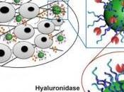 CANCER: nanoparticules équipées pour désarmer tumeur NanoLetters