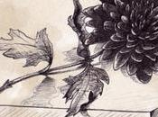 Chrysanthème Noir quelques citations