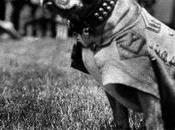 …Pendant première guerre mondiale, chien promu sergent reçu plusieurs médailles?