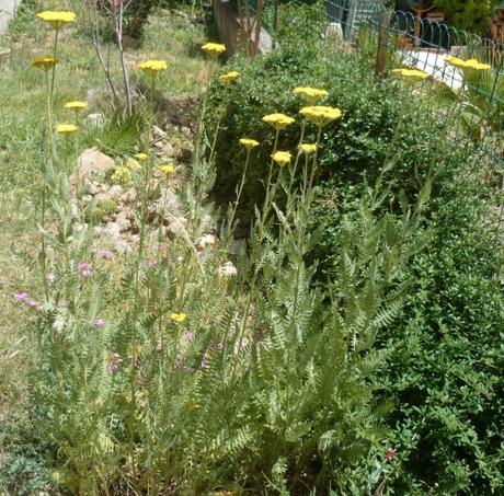 Fleurs au jardin paperblog for Fleurs thes au jardin