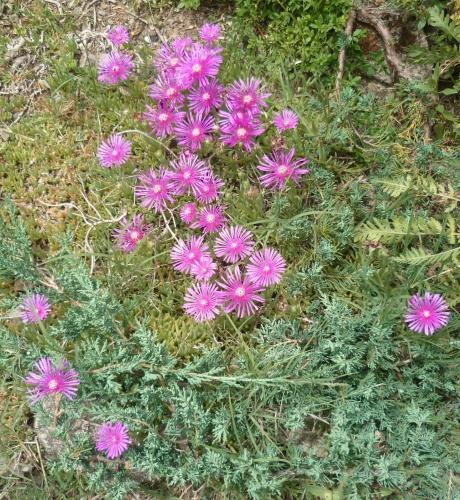 Fleurs au jardin paperblog for Fleurs au jardin