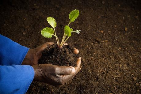 comment les africains rendent leur sol fertile sans endommager leur terre paperblog. Black Bedroom Furniture Sets. Home Design Ideas