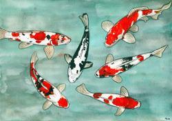 Eklabugs - De mémoire de poisson