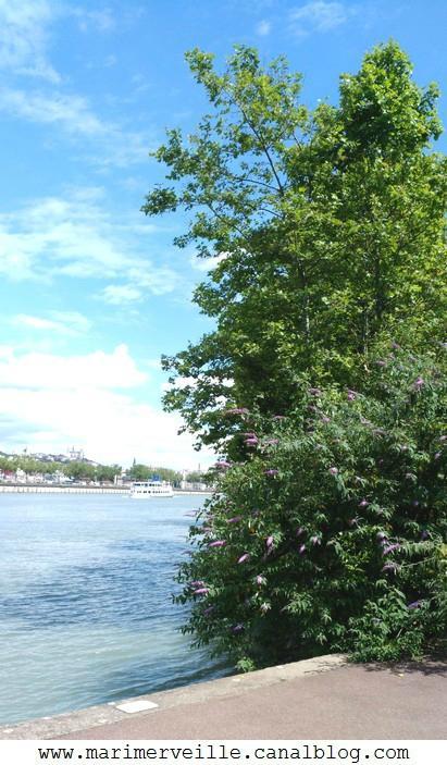 promenade à Lyon 3 - marimerveille
