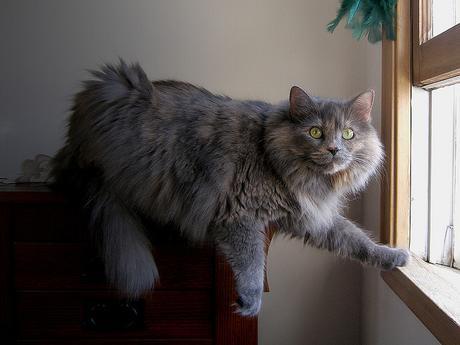 Alimentation chat : Conseils et Astuces pour chat  Animalerie Truffaut