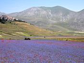 milliers fleurs dans village Castelluccio Norcia Italie