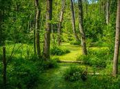 parc-nature Bois-de-l'Île-Bizard!