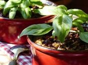 Clafoutis d'aubergines & tomates confites