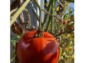 Ici, jardine balcon, récolte, épisode