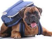 Cours dressage pour chien