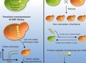 #cell #protéinesintrinsèquementdésordonnées #prions #caractèresbiologiques #hérédité Protéines intrinsèquement désordonnées apparition caractères biologiques héréditaires