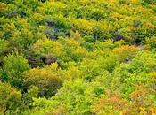 Instantanés forêt