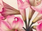Exposition précieux vélins trois siècles d'illustration naturaliste