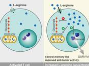 #cell #celluleT #LArginine #métabolisme #activitéantitumorale L-arginine module métabolisme cellules amplifie survie l'activité anti-tumorale