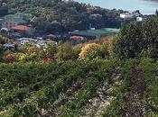 Abrau-Durso Festival vins