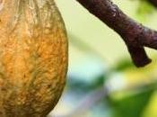 CHOCOLAT: cacao, c'est pour cardio Journal Nutrition