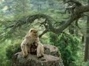 Semaine Conservation Montagne Singes s'engage