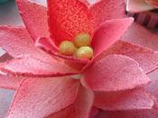 Test pour fleur nénuphar chocolat