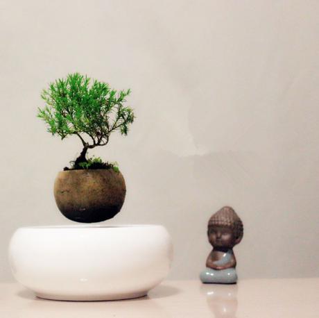 deco on craque pour flow air qui met nos plantes en l vitation paperblog. Black Bedroom Furniture Sets. Home Design Ideas