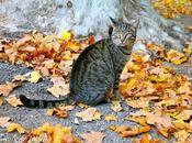 chat feuilles platane