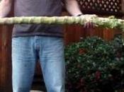 Chou géant Jersey, légume ancien hors-norme