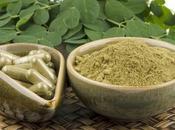 Moringa Oleifera puissants avantages santé
