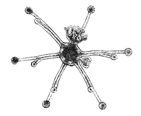Meduse