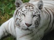 CERZA animaux Eurasiatiques