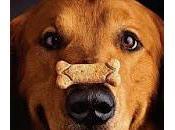comment bien dresser chien