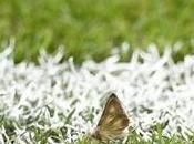 Pourquoi Stade France était-il envahi papillons lors finale l'Euro