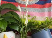 pour plantes very happy