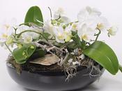Pourquoi telles différences prix dans Orchidées