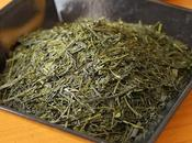 Sencha Fuji-kaori Fujieda, histoire cultivars