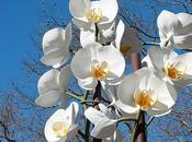 Deux Orchidées Genzken